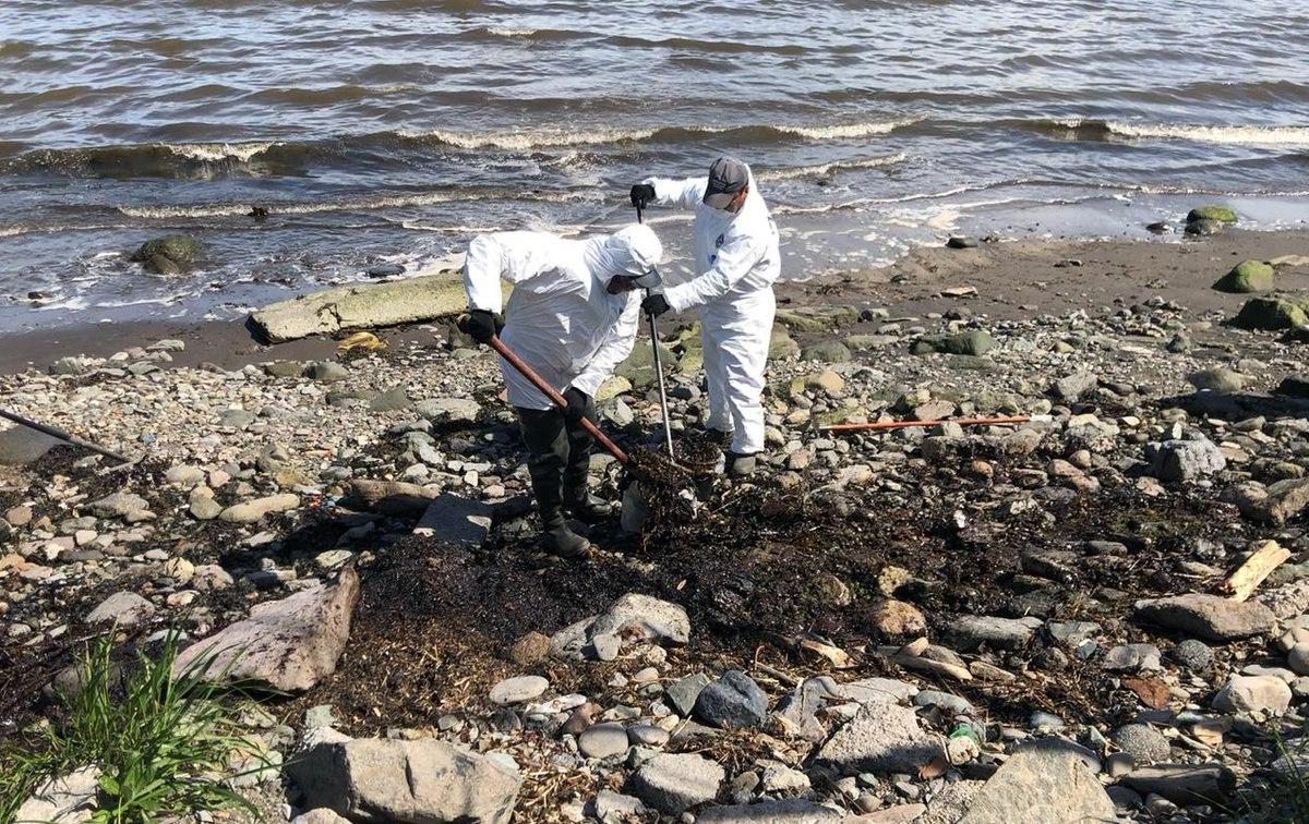Экологическая катастрофа на Камчатке: версии случившегося