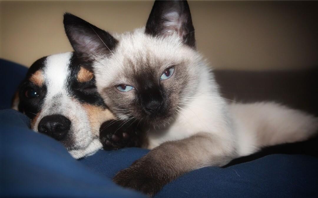 В России запретили изымать у граждан кошек и собак за долги
