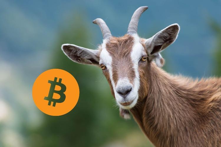 «Биткоин» – козел Цукерберга и будущее криптовалюты