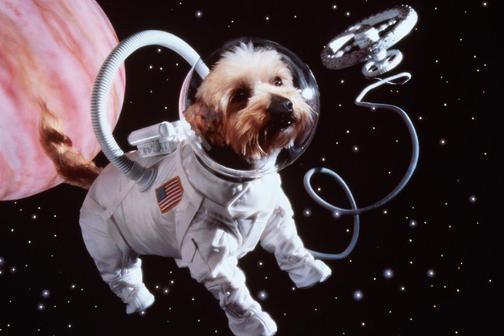 Роскосмос отправит на орбиту животных и растения
