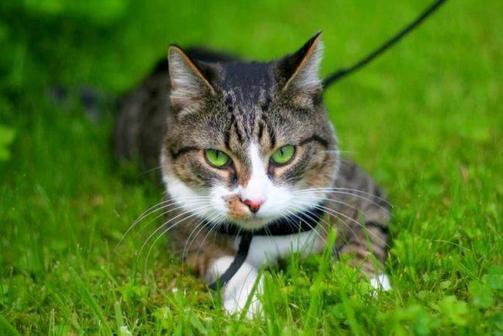 Топ-6 ошейников от блох и клещей для кошек