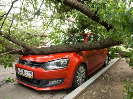 На машину упало дерево: что делать, пошаговая инструкция