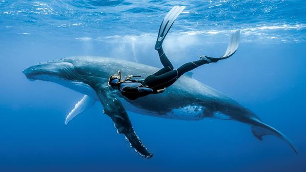 Лучшие фильмы про океан, которые стоит посмотреть