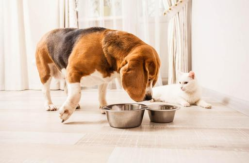 Корм для кошек и собак Classic: обзор, отзывы