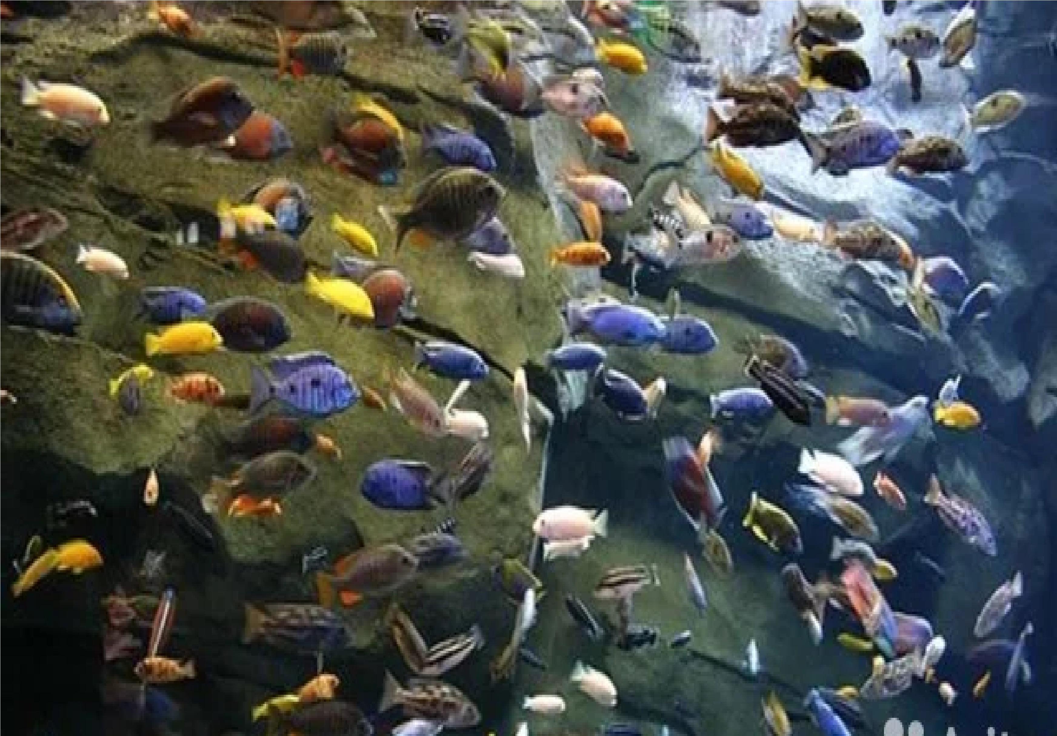 Аквариумные рыбки большой выбор (питомник)