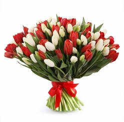151 бело-красный тюльпан