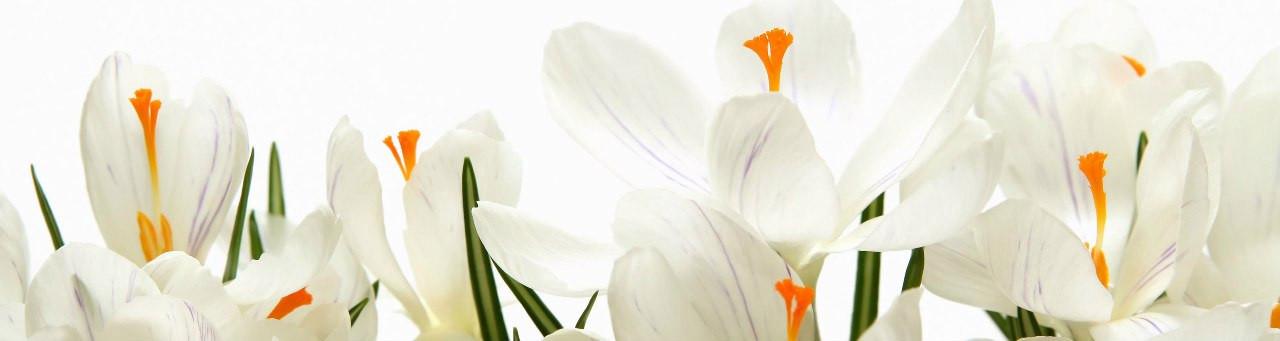 Цветы 2 17