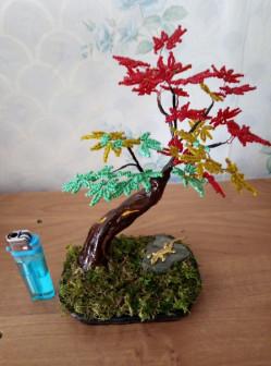 деревце - клён