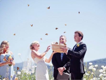 Салют на свадьбу из 25 бабочек всего за 8880 рублей