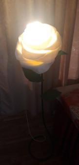 Ростовой цветок Белая роза