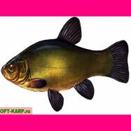 Живая рыба- Ленинградский Линь