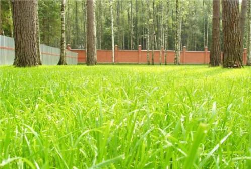 Семена газонных трав, удобрения оптом