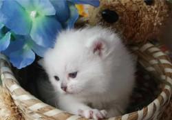 Красивые коти