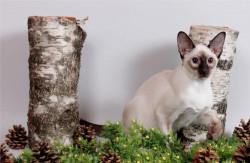 Чудо котик с подарком