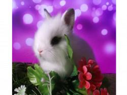 Карликовые крольчата.Доставка