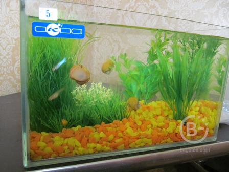 Продам аквариум с рыбками и улитками в комплекте