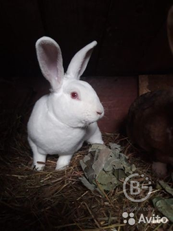 кролики разных пород и разного возраста и окраски.