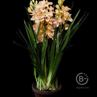 Орхидея искусственная в кашпо