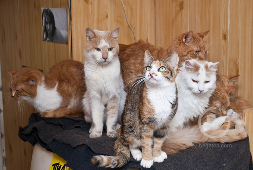 11 кошек