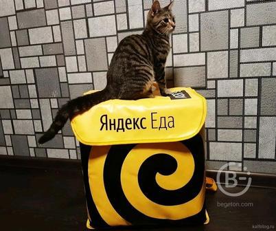 Курьер-доставщик Яндекс.Еда