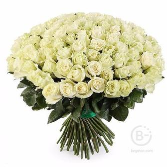 Букет из 101 белой розы!!!