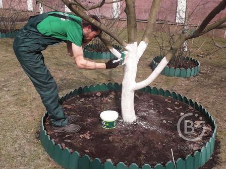 Услуги садовника. Прополка сорняков. Комплексное обслуживание участка, сада, огорода