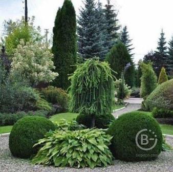 Продаю декоративные растения, готовую ландшафтную композицию