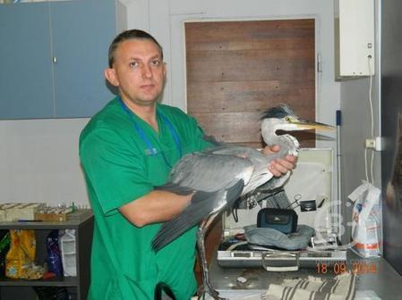 Лечение птиц в Москве.