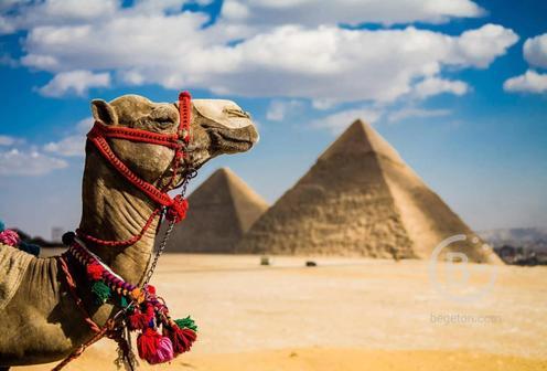 В Египет полетят чартеры