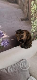 Ищем дом скромной кошечке.