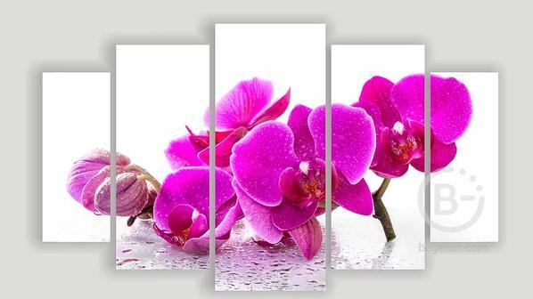Модульная картина «Орхидея Капли»