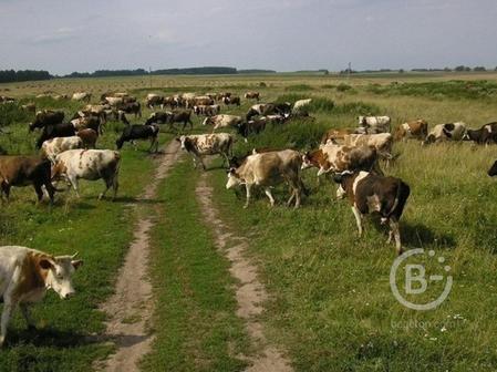 Фермерское хозяйство 68 Га