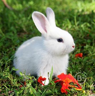 Разводим кроликов. Разводим кроликов. Продаем кроликов  не дорого.