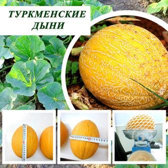 Продаю сладкие Туркменские дыни