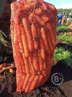 Морковь оптом. Урожай 2021. Беларусь
