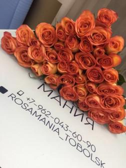 Роза Эквадор 50 см  100 руб