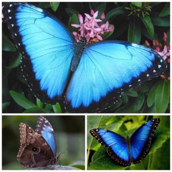 Живая тропическая бабочка
