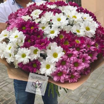 Хризантемы от 75 руб