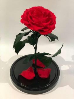 Роза в колбе - тот подарок, от которого ЛЮБАЯ женщина будет в ВОСТОРГЕ!