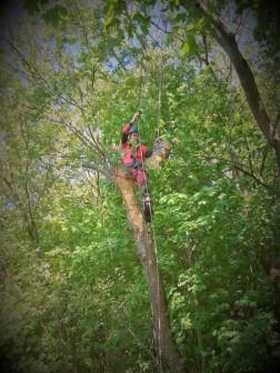 Спил деревьев любой сложности.