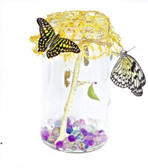 миниферма бабочек