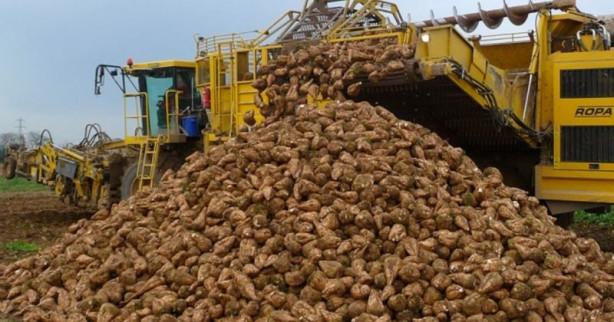 2 млн тонн сахарной свеклы – такой урожай ожидается в Пензенской области