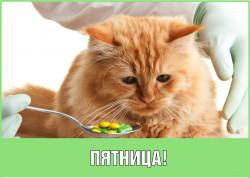 Пятничная акция для владельцев кошек!
