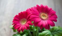 Горшечные цветы к 8 Марта