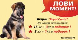 "АКЦИЯ! Royal Canin"" MAXI PUPPY!"