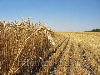 Работы по выделу земельного участка сельхоз назначения