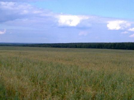 Купля продажа земельных участков