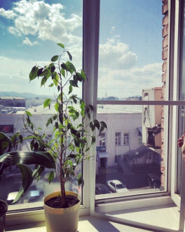 Ремонт окон, дверей, балконов( ПВХ, дерево,Al)