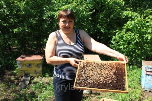 В гости к пчелам!