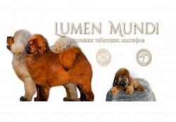 Люмен Мунди, питомник тибетских мастифов